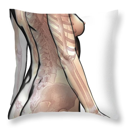 Digitally Generated Image Throw Pillow featuring the photograph Bones Of The Upper Body Female by Science Picture Co