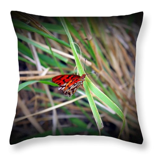 Butterfly Throw Pillow featuring the photograph Butterfly by James Markey