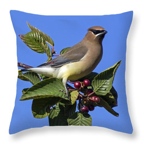 Cedar Waxwing Throw Pillow featuring the photograph Cedar Waxwing by Angie Vogel