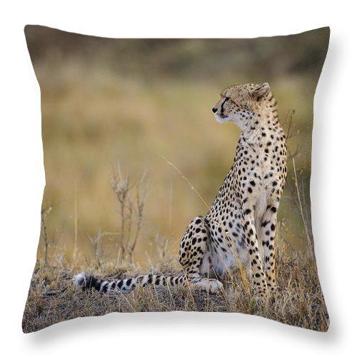 Acinonyx Jubatus Throw Pillow featuring the photograph Cheetah by John Shaw