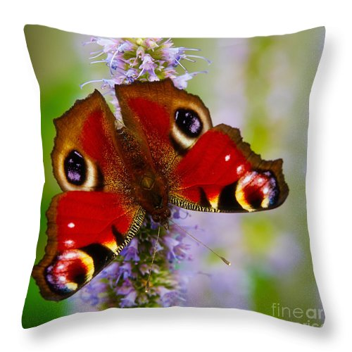 Closeup Throw Pillow featuring the photograph Closeup Of An European Peacock Butterfly by Nick Biemans