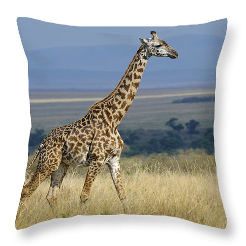 Africa Throw Pillow featuring the photograph Common Giraffe by John Shaw