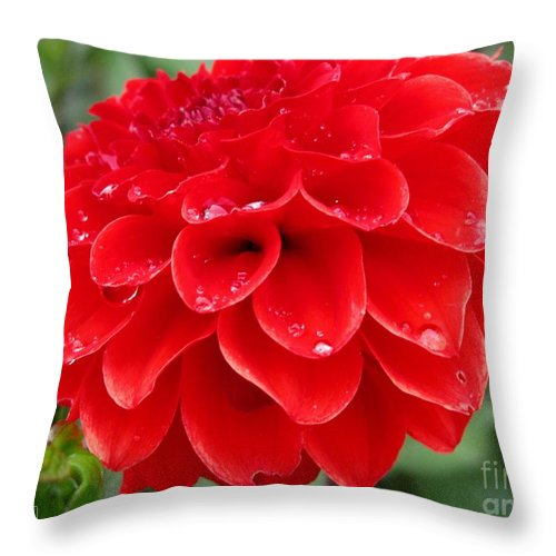 Mccombie Throw Pillow featuring the photograph Dahlia Named Ali Oop by J McCombie