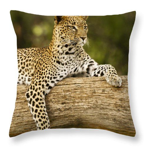 Africa Throw Pillow featuring the photograph Dignity by Michele Burgess