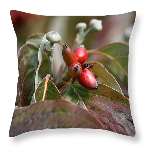 Dogwood Berries Throw Pillow featuring the photograph Dogwood Berries by Luv Photography