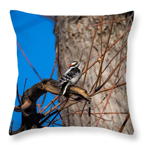 South Dakota Throw Pillow featuring the photograph Downy Woodpecker by M Dale