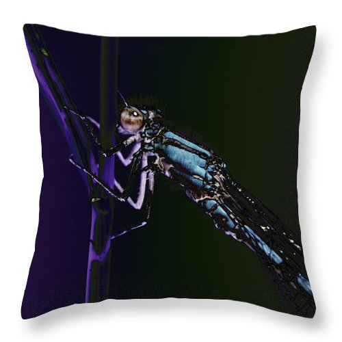 Decoration Throw Pillow featuring the photograph Dragonfly In The Sun by Patrick Kessler