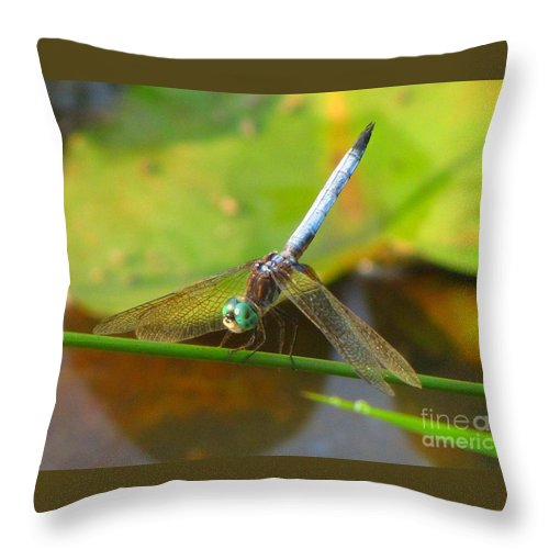 Dragonfly Throw Pillow featuring the photograph Dragonfly by Rrrose Pix