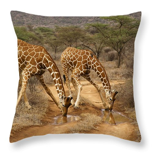 Africa Throw Pillow featuring the photograph Drinking In Tandem by Michele Burgess