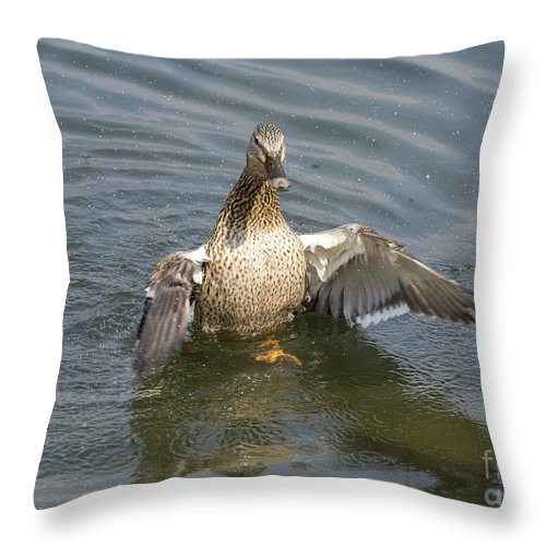 Duck Throw Pillow featuring the photograph Duck by Mats Silvan