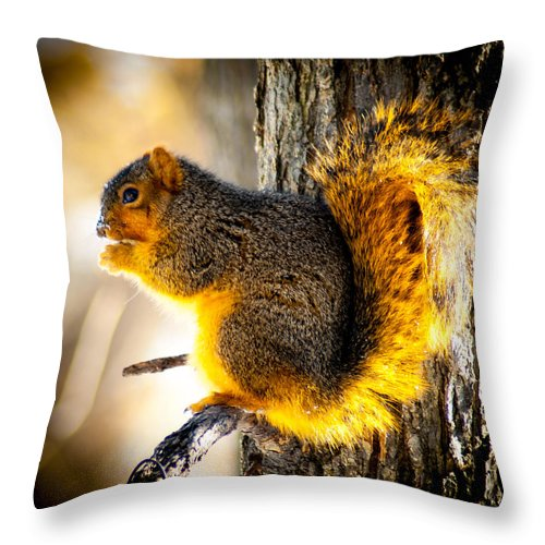 Optical Playground By Mp Ray Throw Pillow featuring the photograph Early Morning Glow by Optical Playground By MP Ray