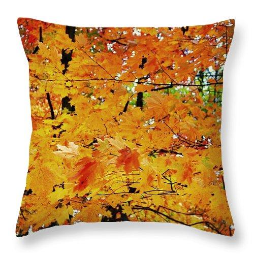 Autumn Throw Pillow featuring the photograph Fall Colors 2014-3 by Srinivasan Venkatarajan