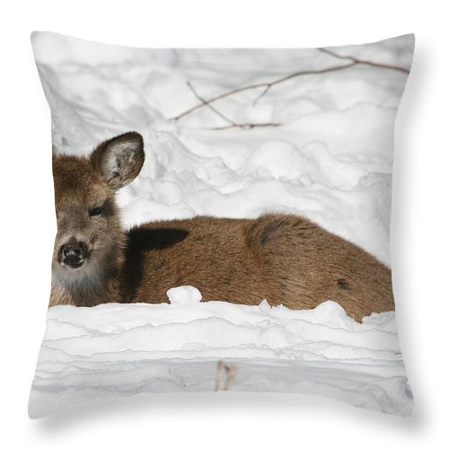 Fawn Throw Pillow featuring the photograph Fawn In The Snow by Ken Keener
