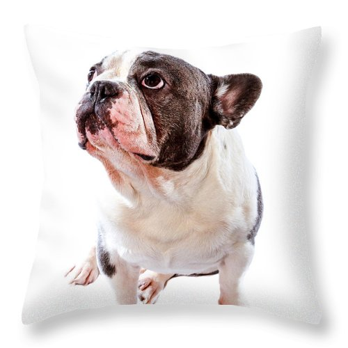 French Bulldog Throw Pillow featuring the photograph French Bulldog by Hugh Mobley