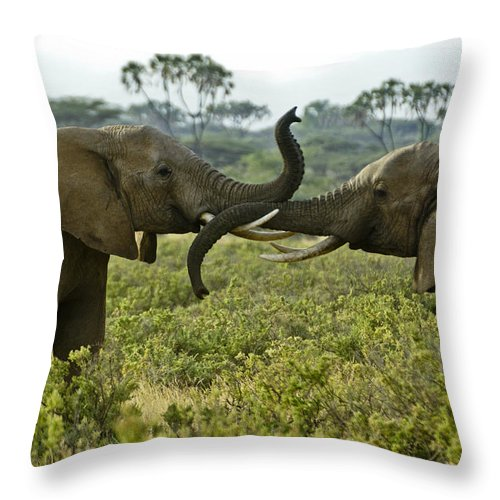 Africa Throw Pillow featuring the photograph Getting Acquainted by Michele Burgess