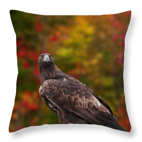 Eagle Throw Pillow featuring the photograph Golden Eagle by Les Palenik