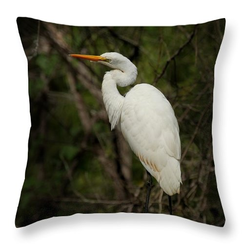 Egret Throw Pillow featuring the photograph Great Egret by Joseph G Holland