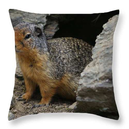 Rock Chuck Throw Pillow featuring the photograph Herman The Rock Chuck by Loni Collins