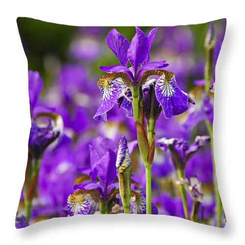 Iris Throw Pillow featuring the photograph Irises by Elena Elisseeva