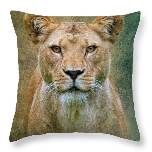 Lion Throw Pillow featuring the photograph Jungle Cat by Steve McKinzie