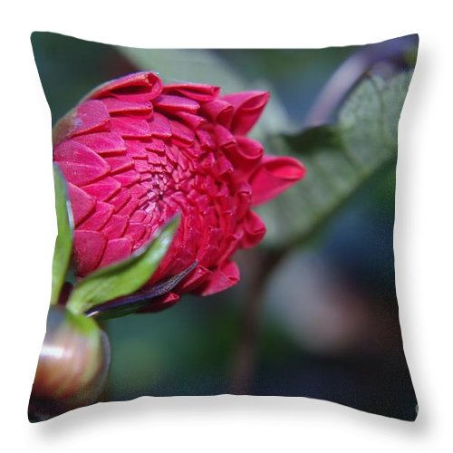 Flowers Throw Pillow featuring the photograph Just Before The Bloom by Jeff Swan
