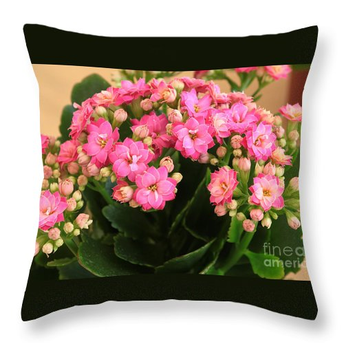 Green Throw Pillow featuring the photograph Kalanchoe. by Alexandr Malyshev