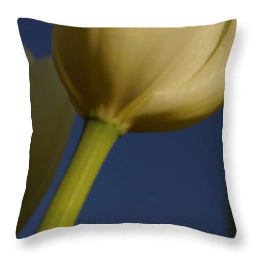 Flowers Throw Pillow featuring the photograph Looking Up by Jeffery L Bowers