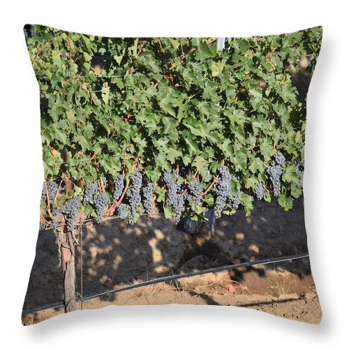 Lorimar Winery Throw Pillow featuring the photograph Lorimar Grapes by Steve Scheunemann