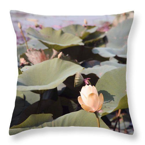 Lotus Throw Pillow featuring the photograph Lotus by Amanda Barcon