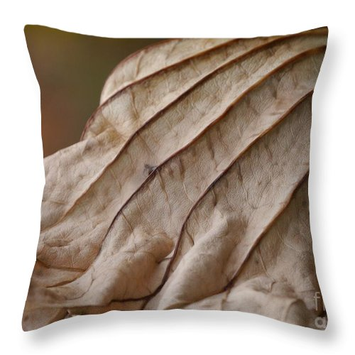 Lotus Leaf Throw Pillow featuring the photograph Lotus Leaf by Jane Ford