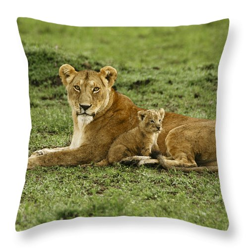Lion Throw Pillow featuring the photograph Mama's Little Baby by Michele Burgess
