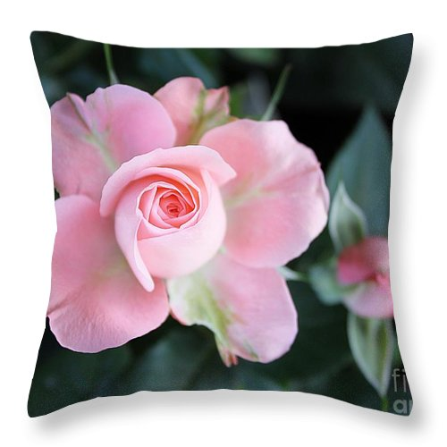 Rose Throw Pillow featuring the photograph Miniature Pink Roses by Sharon Johnston