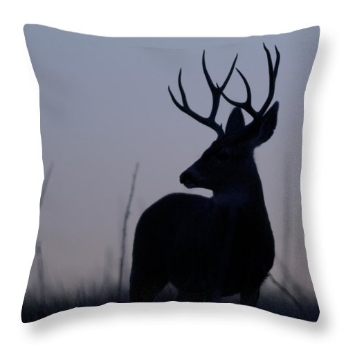 Mule Throw Pillow featuring the photograph Mule Deer Buck At Sunset by Gary Langley