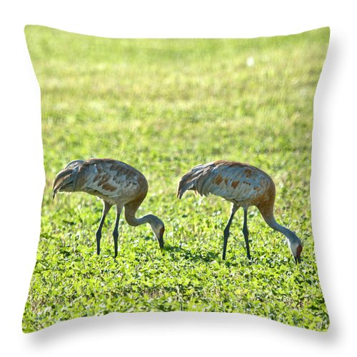 Sandhill Cranes Throw Pillow featuring the photograph 2 Of A Kind by Cheryl Baxter