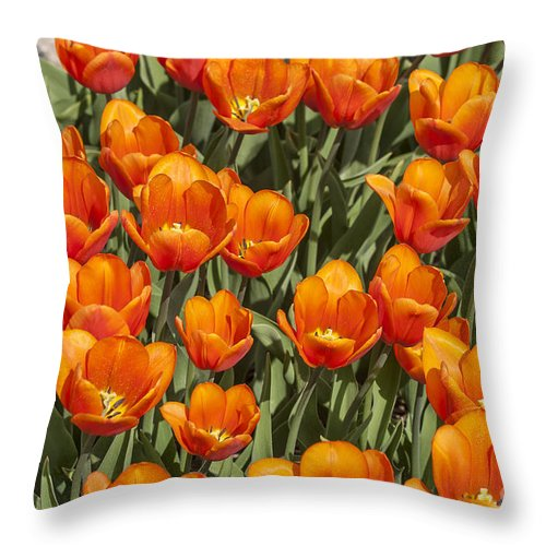 Tulips Throw Pillow featuring the photograph Orange Tulips by Patricia Hofmeester