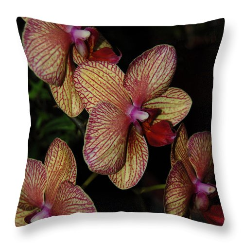 Orchid Throw Pillow featuring the photograph Orchid Quad by Suzanne Gaff