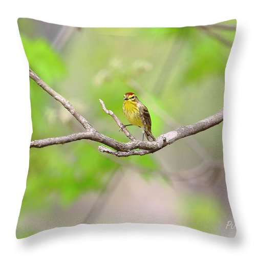 Palm Warbler Throw Pillow featuring the photograph Palm Warbler by PJQandFriends Photography