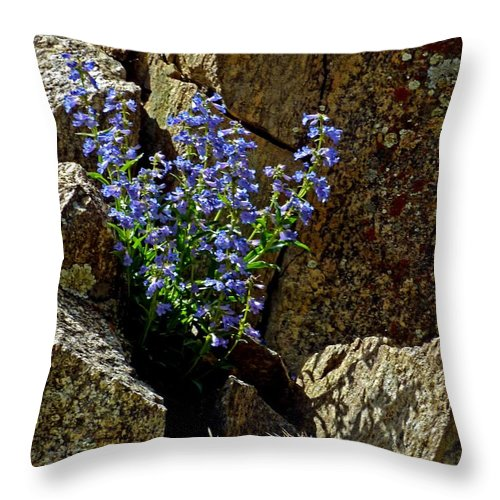 Wildflower Photography Throw Pillow featuring the photograph Persistence by George Tuffy