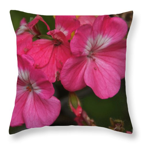 Pink Throw Pillow featuring the photograph Pink by William Norton