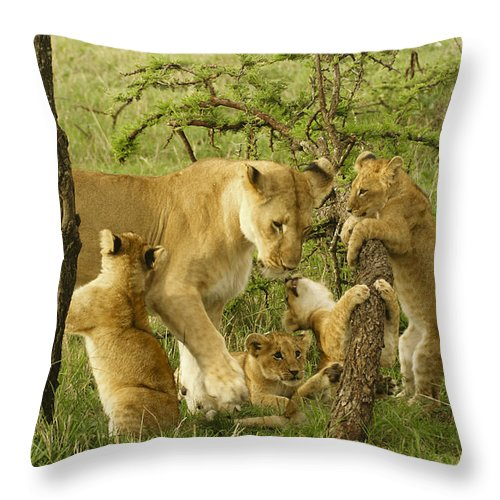 Lion Throw Pillow featuring the photograph Playing With Mom by Michele Burgess