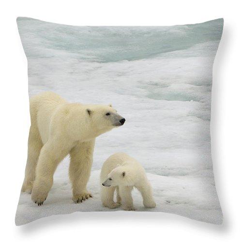 Polar Bear Cub Throw Pillow featuring the photograph Polar Bear With Cub by John Shaw