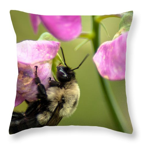 Optical Playground By Mp Ray Throw Pillow featuring the photograph Pollination Nation V by Optical Playground By MP Ray
