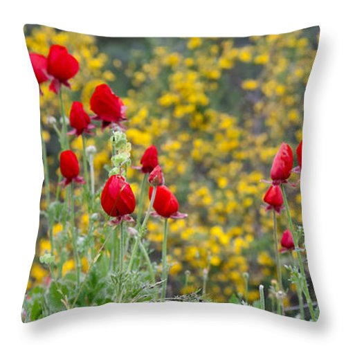 Poppies Throw Pillow featuring the photograph Red On Yellow by Uri Baruch