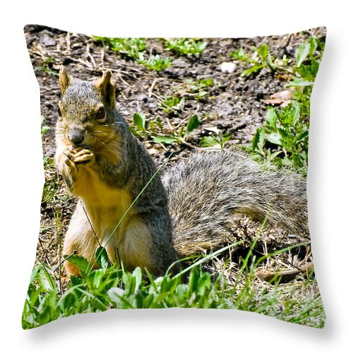 Red Squirrel Throw Pillow featuring the photograph Red Squirrel by Bob and Nadine Johnston