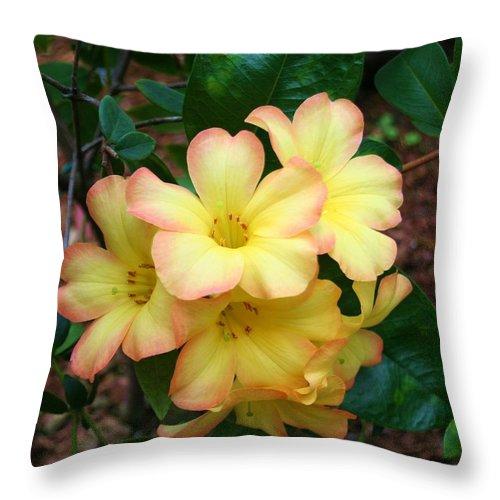 Karen Silvestri Throw Pillow featuring the photograph Rhododendron 'toff' by Karen Silvestri