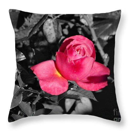 Flower Throw Pillow featuring the photograph Rose by Erik Dunn