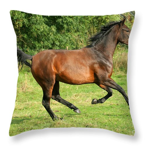 Horse Throw Pillow featuring the photograph Running Free by Angel Ciesniarska