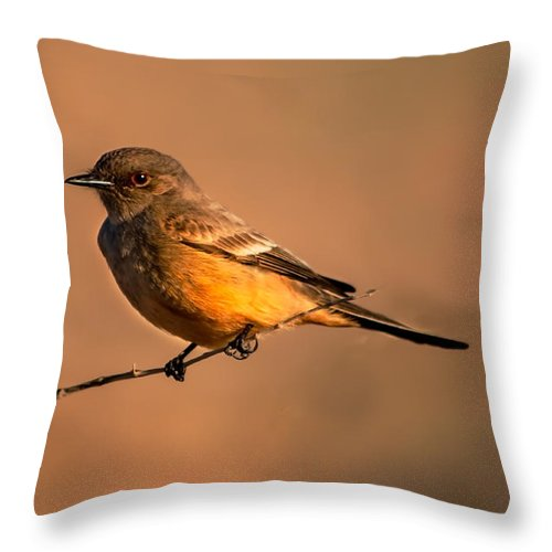 Birds Throw Pillow featuring the photograph Say's Phoebe by Robert Bales