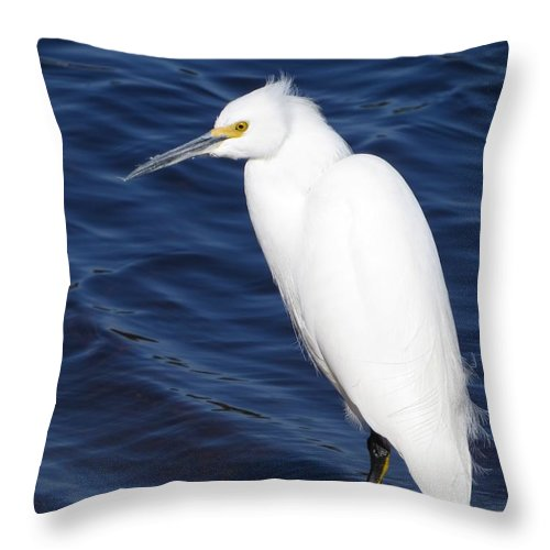 Snowy Egret Throw Pillow featuring the photograph Snowy Egret by Zina Stromberg