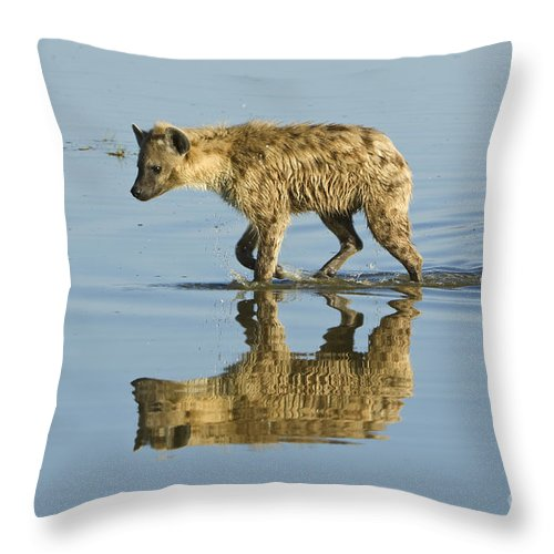 Africa Throw Pillow featuring the photograph Spotted Hyaena In Lake Nakuru, Kenya by John Shaw